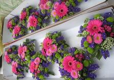 Egypte -Jordanie (Petra)janvier 2009+fleurs -jardin 322.JPG